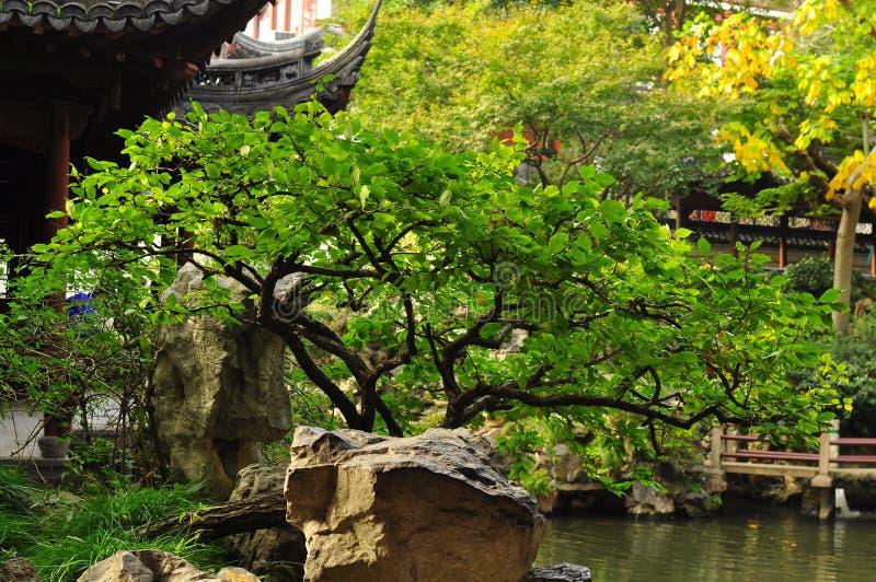 Det härliga bonsaiträdet i den gamla templet för stadsgud` s och Yuyuan arbeta i trädgården, Shanghai fotografering för bildbyråer