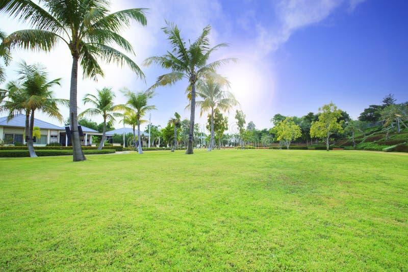 Det härliga fältet för grönt gräs parkerar offentligt mot vibrerande blått royaltyfri fotografi