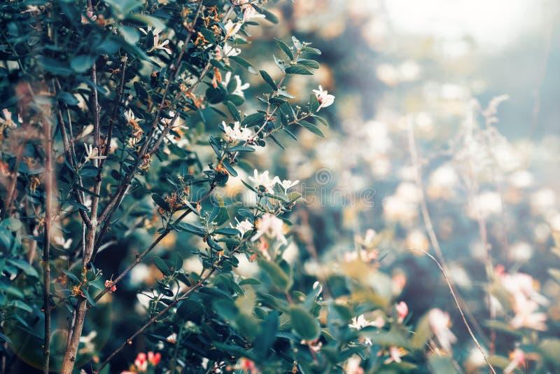 Det härliga felika drömlika magiska vita trädet blommar med mörker - gräsplansidor arkivbild
