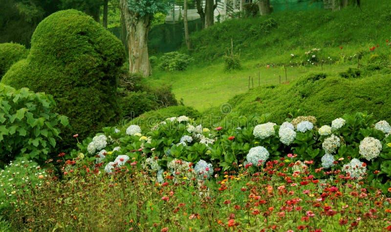 Det härliga gröna fältet med blommor och växter i den chettiar kodaikanalen parkerar royaltyfri fotografi