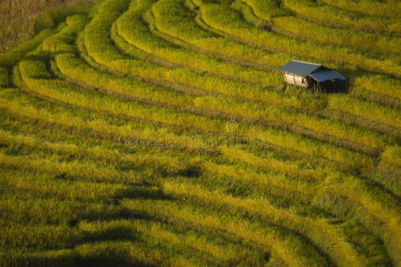 Det härliga landskapet av den Mae Cham risfältet terrasserade på berget Chiang Mai thailand royaltyfri bild