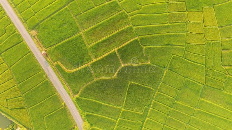 Det härliga landskapet av risfält royaltyfria bilder