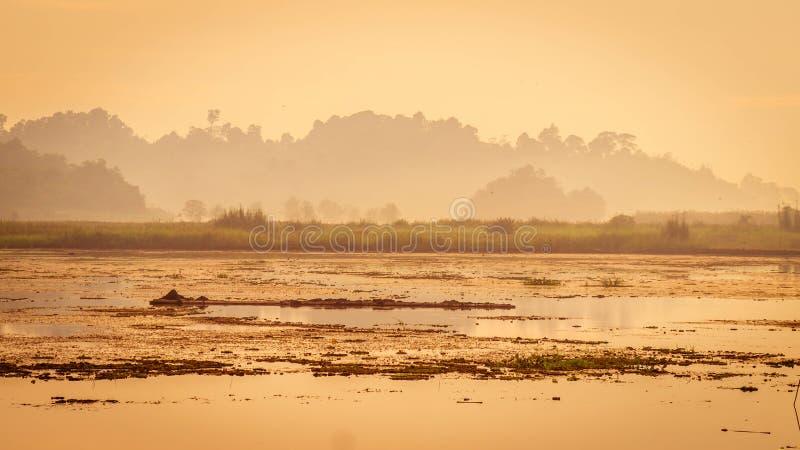 Det härliga landskapet av träsket och skogen omger Benanga behållare, Samarinda, Borneo, Indonesien fotografering för bildbyråer