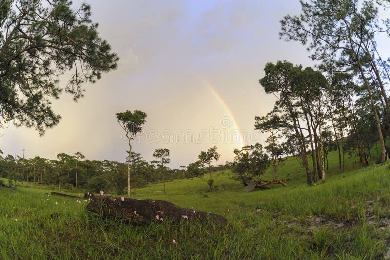 Det härliga landskapet efter regnet i nationell Bio-mångfald lurar arkivbilder