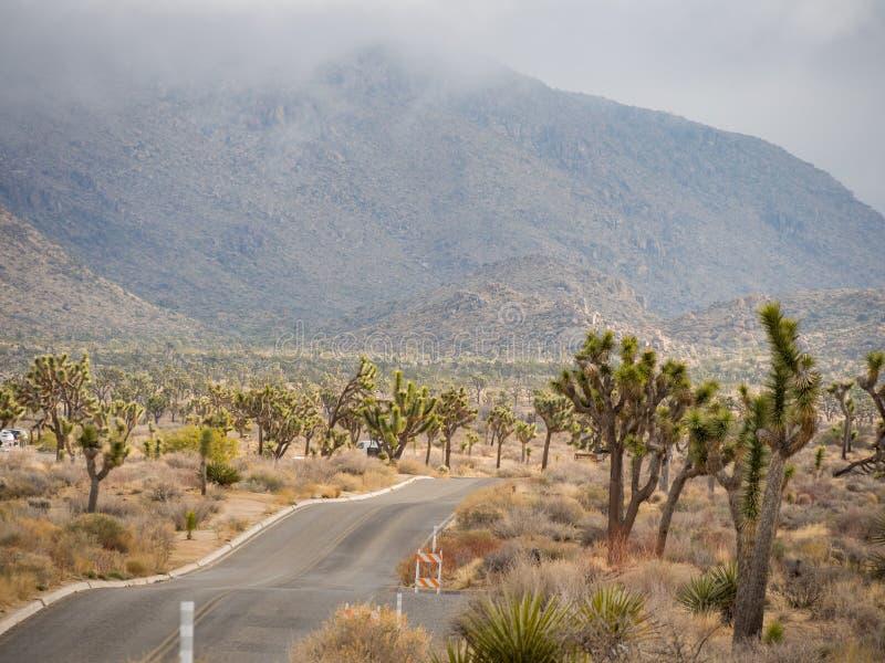 Det härliga landskapet med det Joshua trädet, berg, vaggar fotografering för bildbyråer