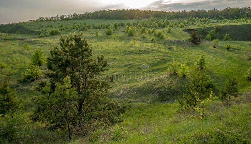 Det härliga landskapet på solnedgången i en ravin, sörjer, björken, gräs royaltyfri bild