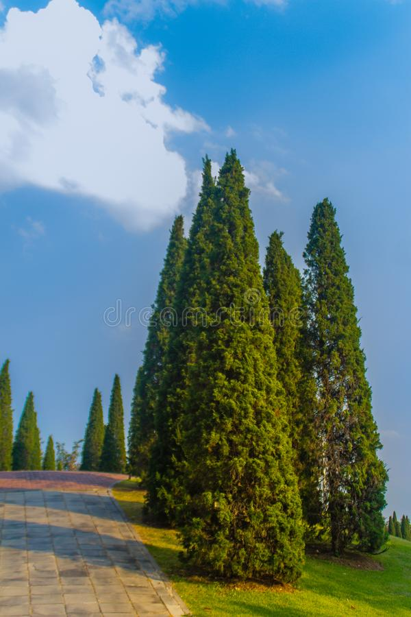 Det härliga lilla kullelandskapet med högväxt sörjer träd på fält för grönt gräs och vit molnbakgrund för blå himmel Chinensis Ju royaltyfri bild