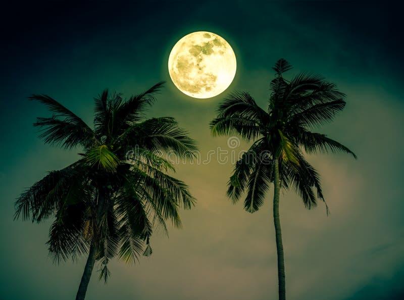 Det härliga nattlandskapet av grön himmel med den ljusa fullmånen över kokosnöten gömma i handflatan Serenitetnaturbakgrund Utomh royaltyfri fotografi