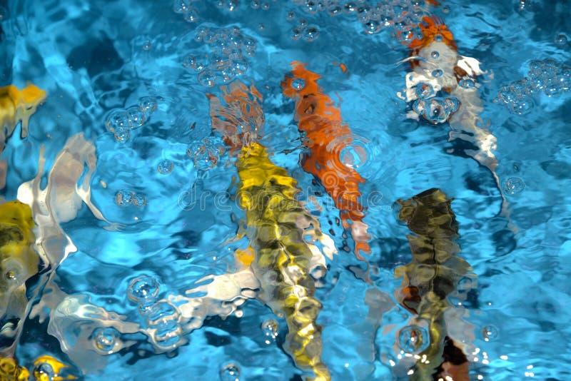 Det härliga och färgglade fiskinfallet kverulerar i det plast- dammet arkivbild