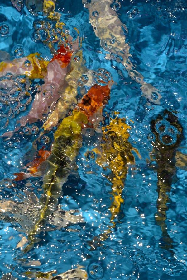 Det härliga och färgglade fiskinfallet kverulerar i det plast- dammet arkivfoto