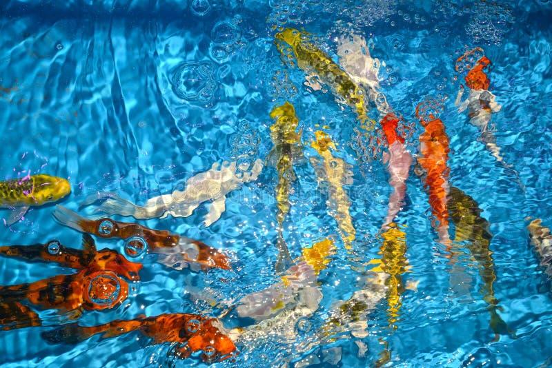 Det härliga och färgglade fiskinfallet kverulerar i det plast- dammet royaltyfria bilder
