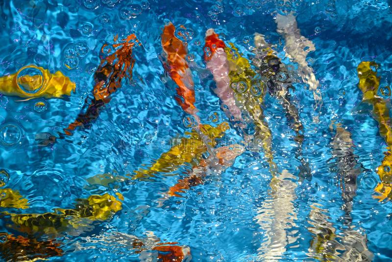 Det härliga och färgglade fiskinfallet kverulerar i det plast- dammet royaltyfria foton