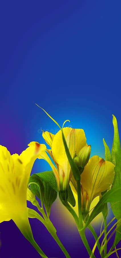 det härliga snittet blommar yellow royaltyfria foton