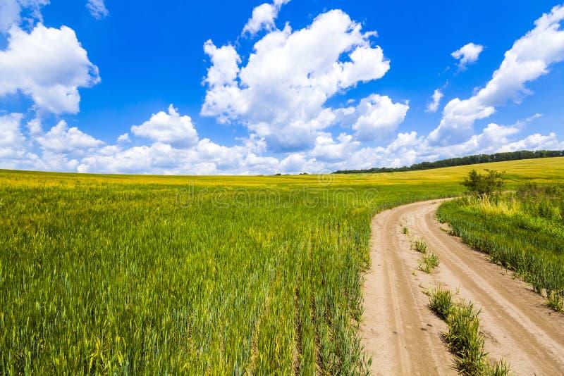 Det härliga sommarlandskapet med grönt gräs, smutsgrusvägen och vit fördunklar royaltyfria foton