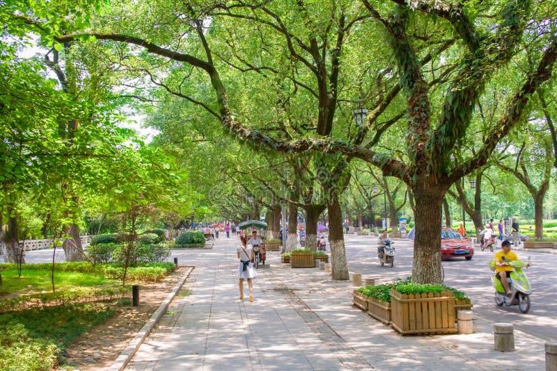 Det härliga trädet fodrade vägen i Guilin Färgrika fot- gångbanor royaltyfri bild