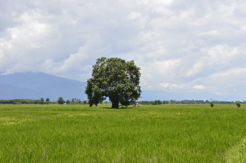 Det härliga trädet i fältet är himlen royaltyfria foton
