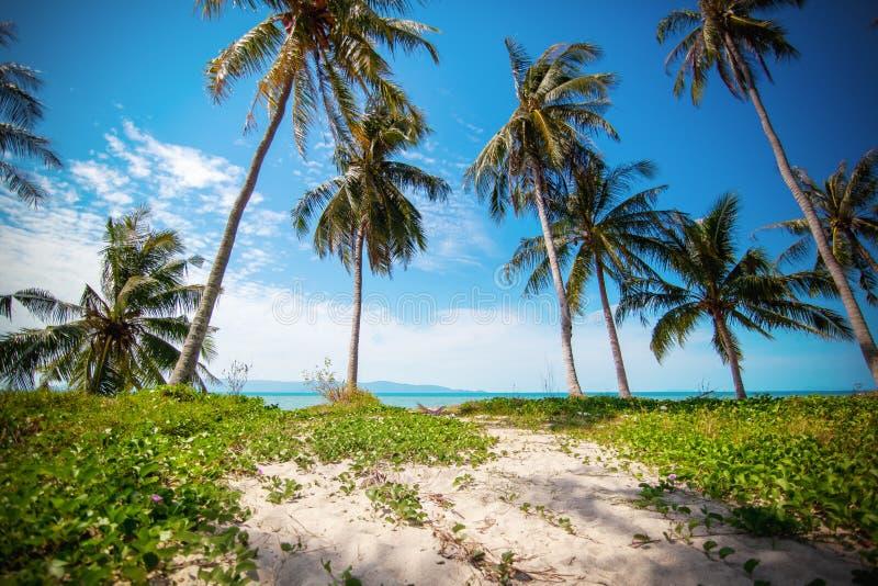 Det härliga tropiska landskapet, gömma i handflatan dungen på stranden Semester- och loppbakgrund royaltyfri foto