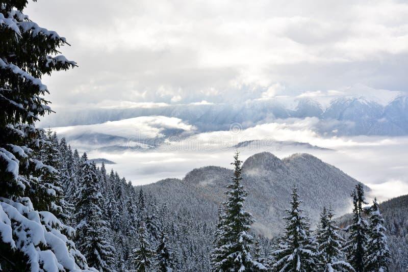 Det härliga vinterlandskapet med snö täckte träd på Postavaru, Rumänien royaltyfria bilder