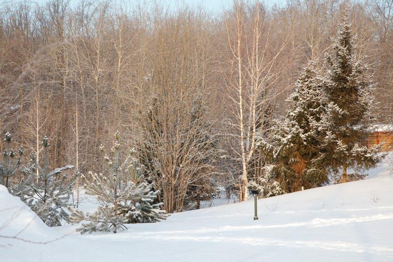 Det härliga vinterskoglandskapet, täckte träd snöar royaltyfria foton