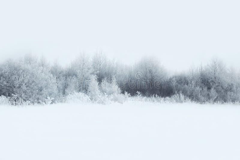 Det härliga vinterskoglandskapet, täckte träd snöar arkivbilder