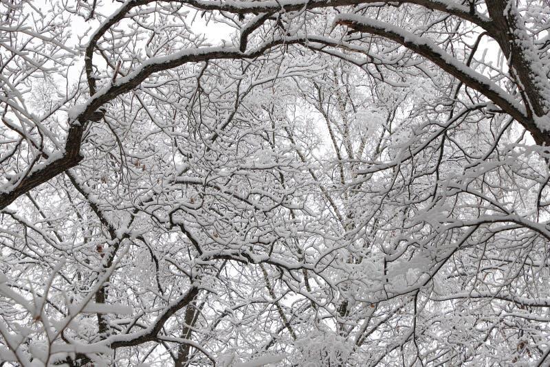 Det härliga vinterskoglandskapet, täckte träd snöar arkivbild
