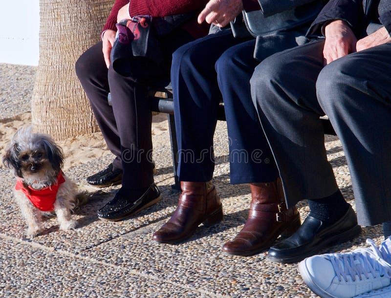 Det höga folket sitter på en bänk som håller ögonen på en liten hund royaltyfri foto