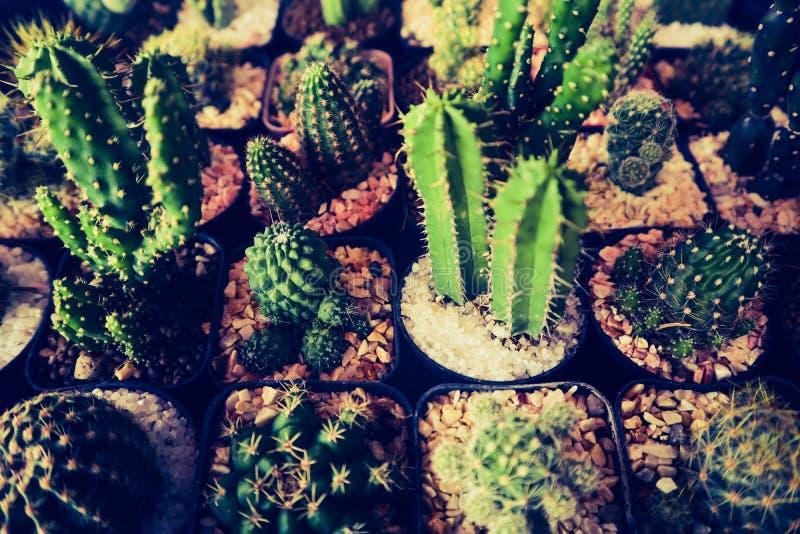 Det h?rliga kaktustr?det i de offentliga tr?dg?rdarna som ?r utomhus- och, parkerar fotografering för bildbyråer