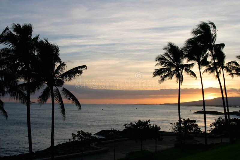 det hawaii hav gömma i handflatan skysolnedgångtrees arkivfoto