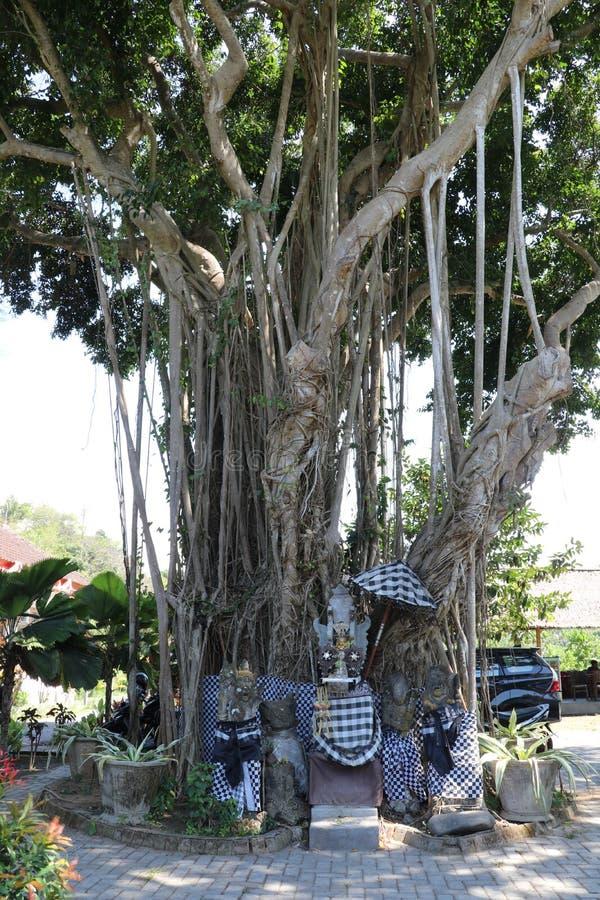 Det heliga trädet Ficus benghalensis, inlindad i svart och vit väv som driver bort onda andar Hindu-templet utformat för uppoffri arkivbild