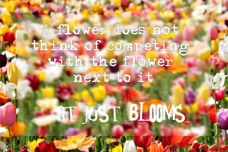Det inspirerande citationstecknet - en blomma inte tänker av att konkurrera med blomman bredvid den - det blommar precis fotografering för bildbyråer