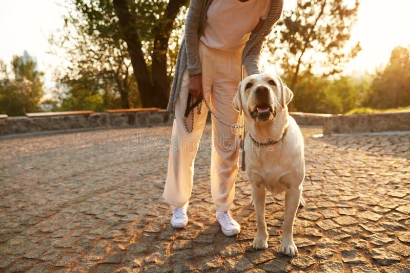 Det kantjusterade skottet av den unga afrikanska damen som går med hunden parkerar in royaltyfri bild