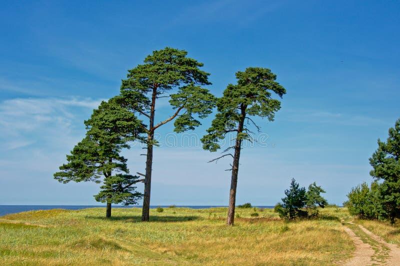 Det Karosta landskapet med sörjer träd längs stranden av det baltiska havet på Liepaja, Lettland royaltyfri bild