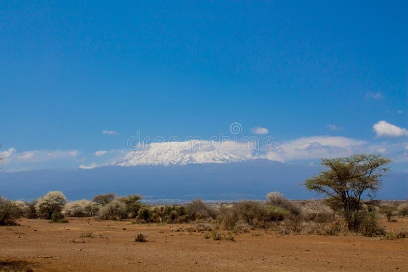 Det Kilimanjaro berget, Afrika, Tanzania och Kenya gränsar den Amboseli nationalparken arkivbilder