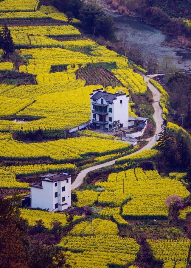 Det kinesiska forntida gamla dalhuslandskapet i berg med våldtar blomman, i anhui, Kina royaltyfri bild