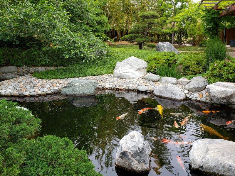 Det Koi dammet i japansk kamratskapträdgårdBalboa parkerar San Diego royaltyfria foton