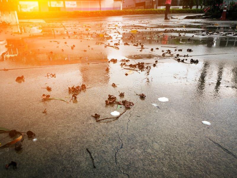 Det konkreta golvet med torkade sidor efter regnstormen royaltyfri bild