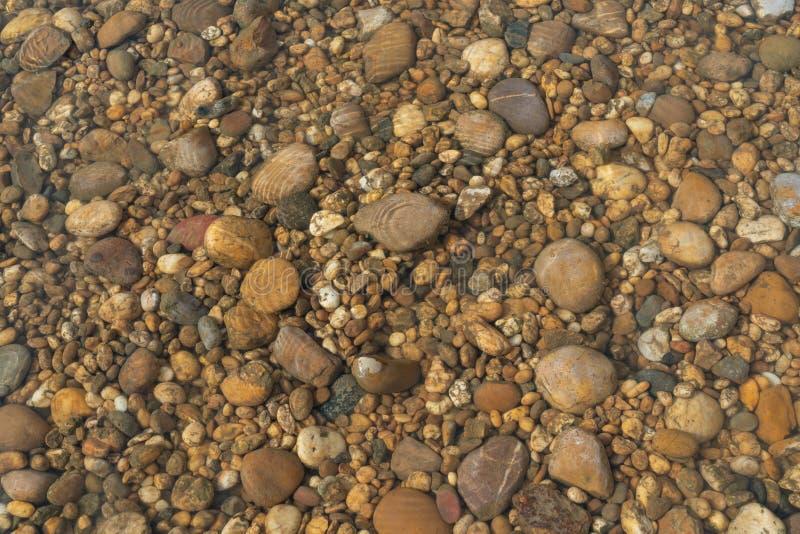 Det kust- härliga havet vaggar i ett vatten - Stilla havetbotten vaggar undervattens-, genomskinligt klart vatten för textur av h arkivfoton
