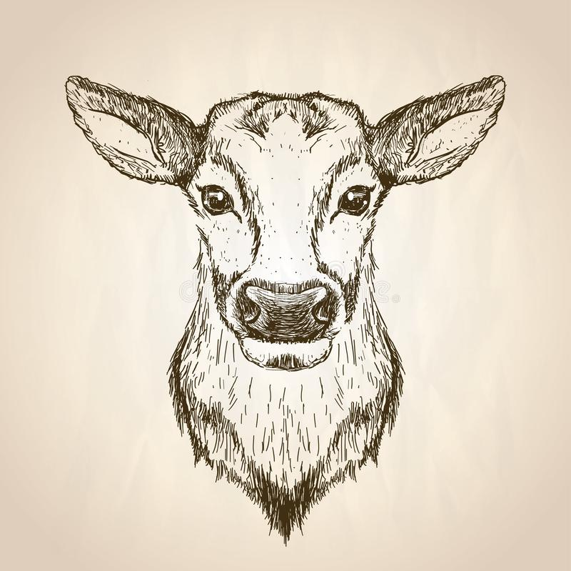 Det kvinnliga hjortdiagrammet skissar ståendeillustrationen, främre sikt royaltyfri illustrationer