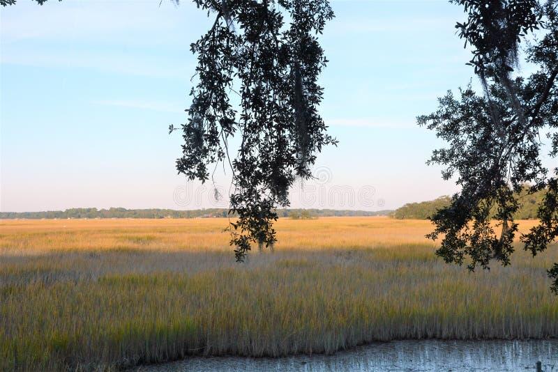 Det låga landet av South Carolina har mycket i vägen av härliga landskap royaltyfria foton