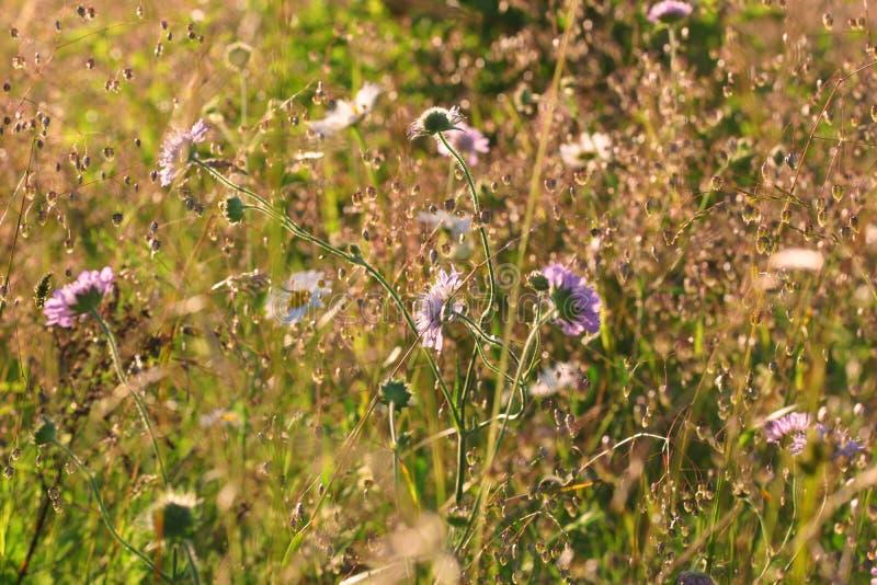 Det lantliga landskapet, gräs tände vid varmt solbelyst royaltyfri foto