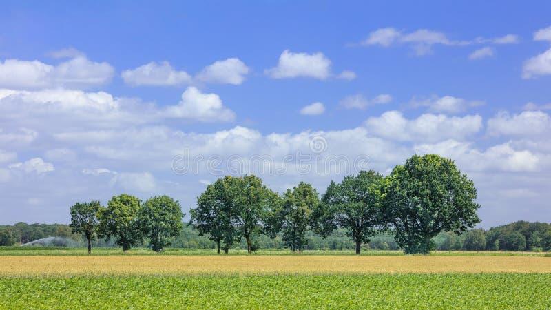 Det lantliga landskapet med träd på en sommardag med en blå himmel, trasslar ihop, Belgien royaltyfri foto