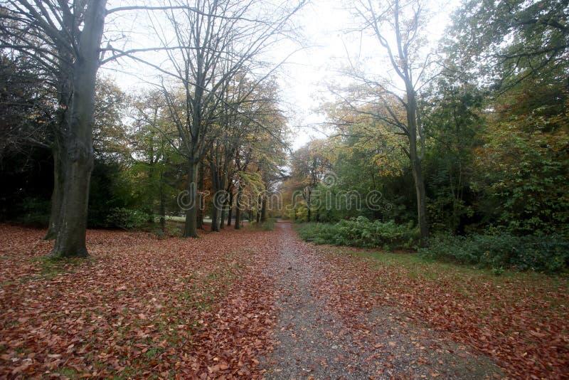 Det Lickey kullelandet parkerar royaltyfria bilder