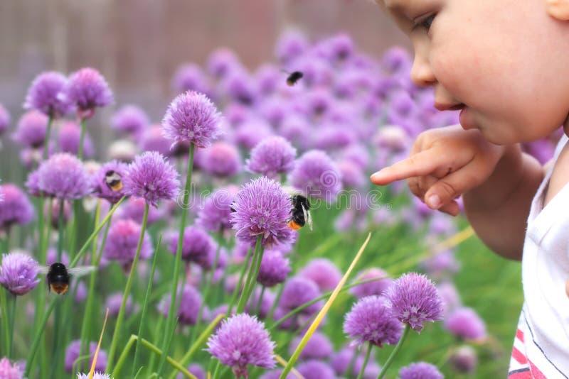 Det lilla barnet pekar ett finger på humlan på blomman Behandla som ett barn diskot royaltyfri fotografi