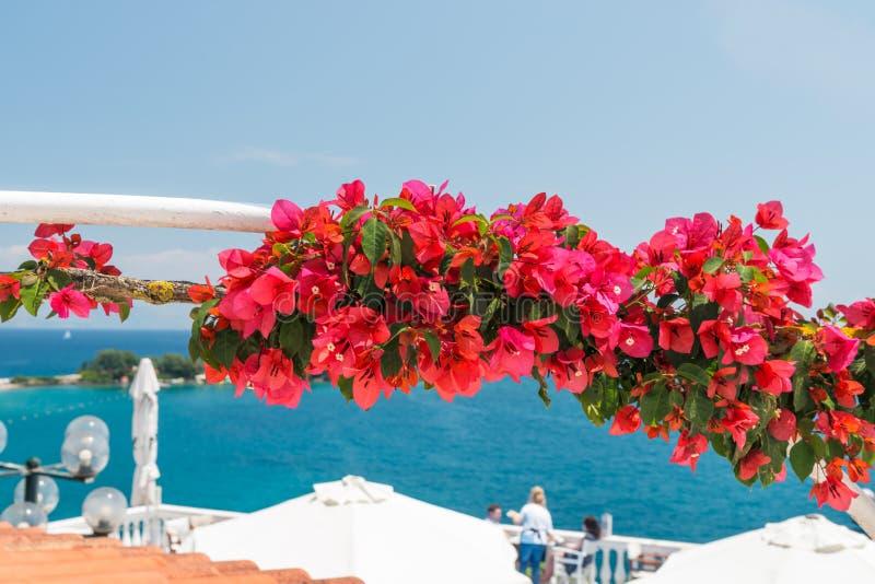 Det lilla kafét i den Korfu ön med bougainvillean blommar arkivbilder