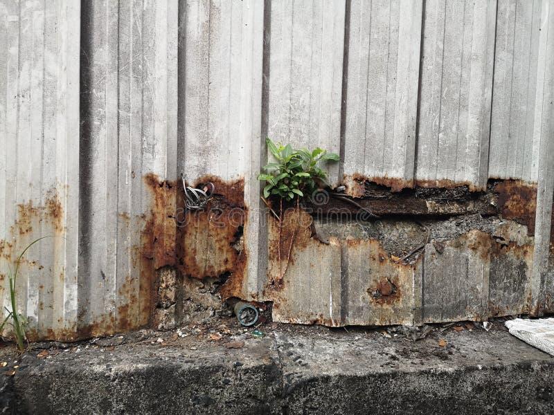 Det lilla trädet var fött på den gamla stålväggen royaltyfri bild