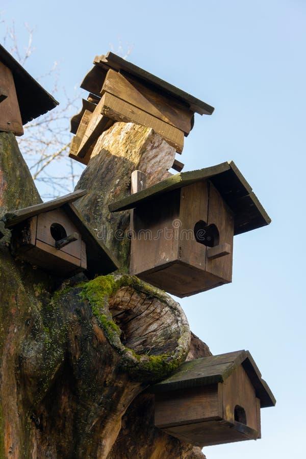 Det lilla trähuset för fåglar sörjer på trädet, begrepp - att bry sig för lösa fåglar royaltyfri foto