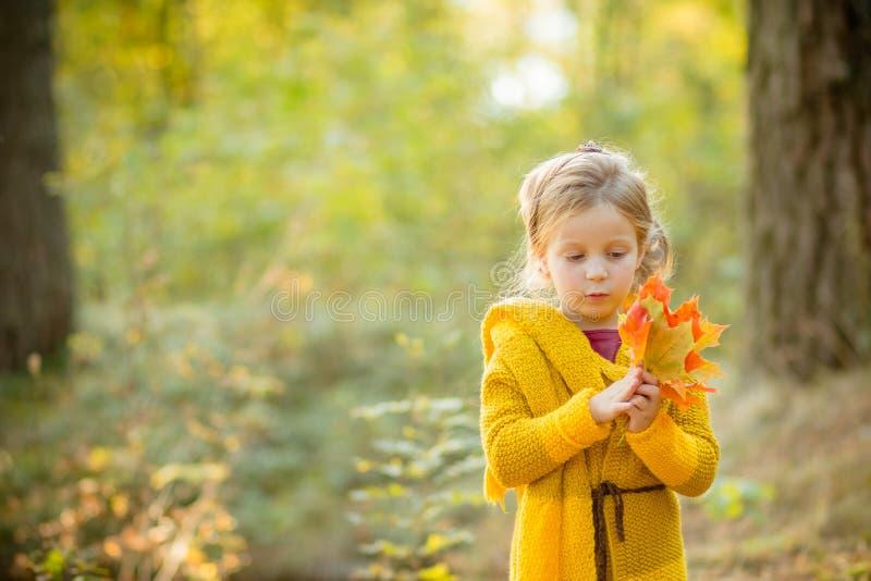 Det lyckliga barnet som spelar med gula lönnlöv, och drömmar i höst parkerar utomhus under solstrålar Lycka nedgång och royaltyfria foton