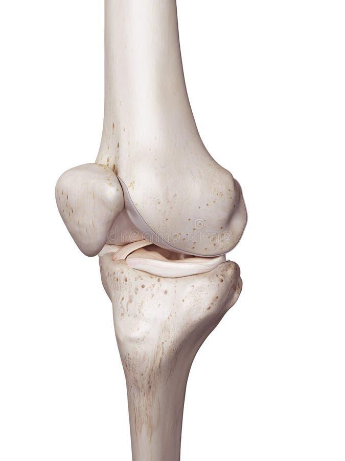 Det mänskliga knäet stock illustrationer