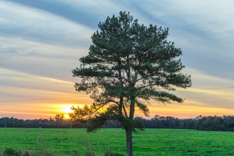 Det magiska skymningträdet och solnedgången 02 royaltyfri foto