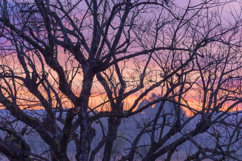 Det magiska skymningträdet och solnedgången 03 royaltyfri foto
